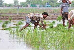 Every year at this time Darbhanga and nearby regions witness an exodus of labourers to Punjab and other places to seek jobs ahead of the paddy transplantation season.