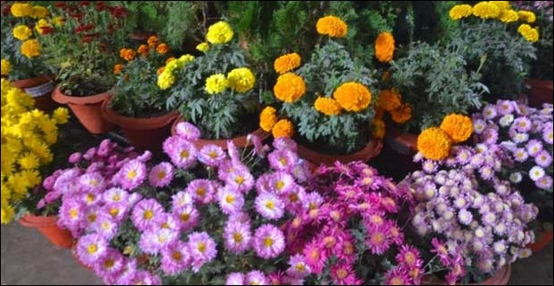 Flower Show Darbhanga on 24 and 25 December 2016